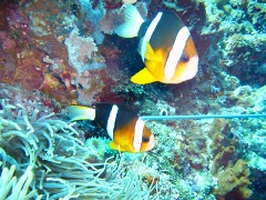 Diving into Manado – The Unstoppable Beauty of Underwater World