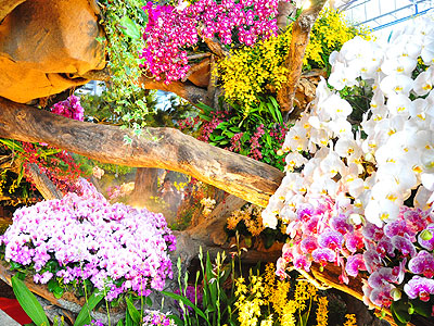 2012 International Orchid Exhibition