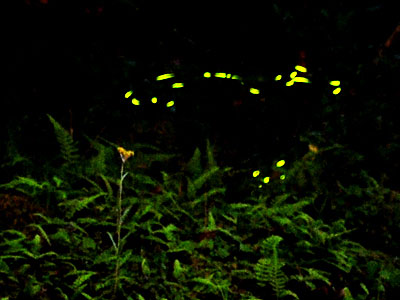 【Travel series】Fireflies Season in Nantou
